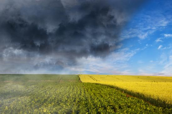 Collapse of weather - Dark stormy clouds over wheat field.