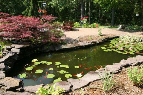 a backyard koi pondClick on the thumbnail to discover more photos of backyard landscaping and ponds. Thanks!